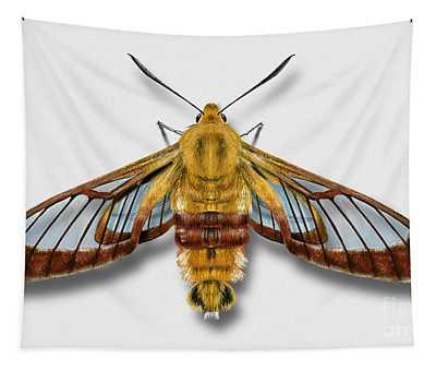 Broad-bordered Bee Hawk Moth Butterfly - Hemaris Fuciformis Naturalistic Painting -nettersheim Eifel Tapestry