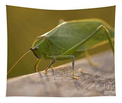 Broad-winged Katydid Tapestry