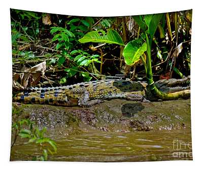 Tapestry featuring the photograph Caiman Cocodilus by Gary Keesler