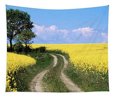 Canola, Farm, Yellow Flowers, Germany Tapestry