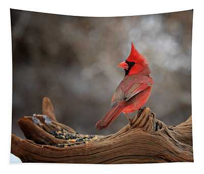 Cardinal On A Log Tapestry