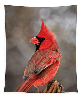 Cardinal On A Log Portrait Tapestry