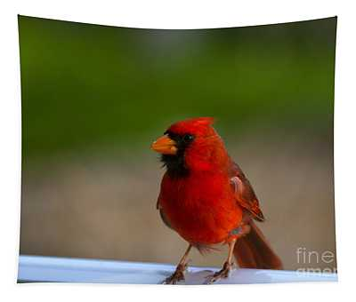 Cardinal Red Tapestry