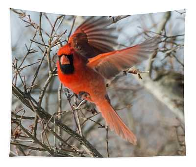Cardinal Takes Off  Tapestry