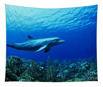 Caribbean, Bottlenose Dolphin Underwater Over Coral Reef _captive Released_ Tursiops Truncatus Tapestry