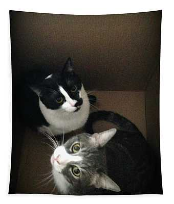 Tabby Cat Kitten Photography Pets  Tapestry