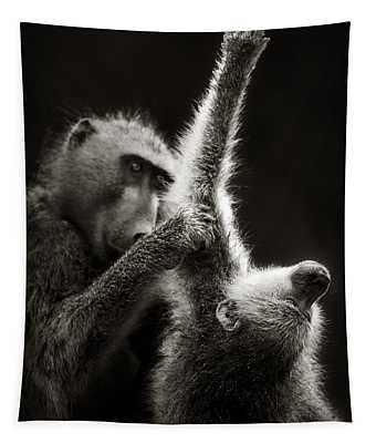 Chacma Baboons Grooming Tapestry