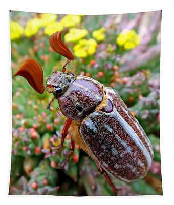Chafer Beetle On Medusa Succulent 2 Tapestry