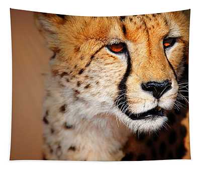 Cheetah Wall Tapestries