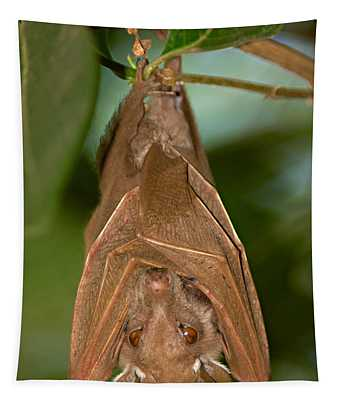 Close-up Of A Bat Hanging Tapestry