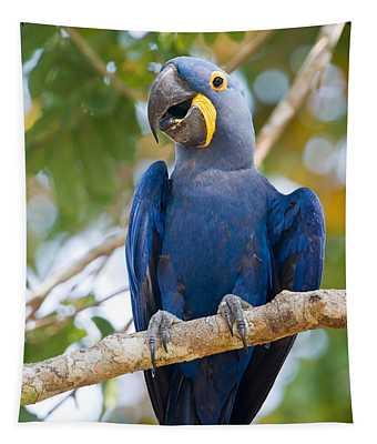 Close-up Of A Hyacinth Macaw Tapestry