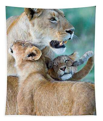 Close-up Of A Lioness And Her Two Cubs Tapestry