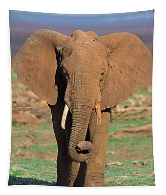 Close-up Of An African Elephant Walking Tapestry