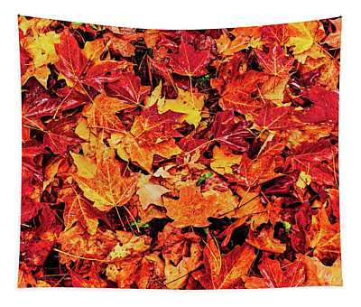 Close-up Of Maple Leaves On Grass, New Tapestry