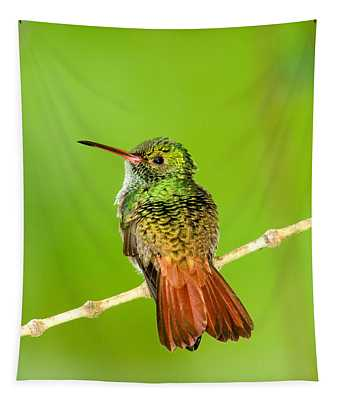 Close-up Of Rufous-tailed Hummingbird Tapestry