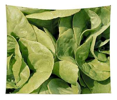 Closeup Of Boston Lettuce Tapestry
