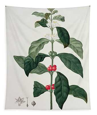 Coffea Arabica From Phytographie Tapestry