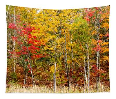 Colorful Trees In The Forest Tapestry