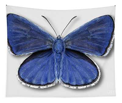 Common Blue Butterfly - Polyommatus Icarus Butterfly Naturalistic Painting - Nettersheim Eifel Tapestry