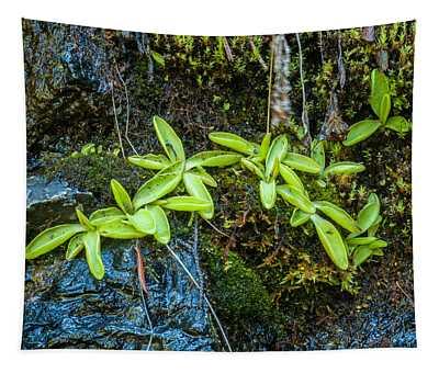 Common Butterwort Tapestry