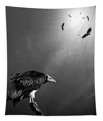 Vulture Photographs Wall Tapestries