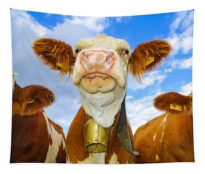 Cow Looking At You - Funny Animal Picture Tapestry