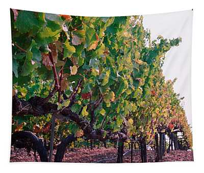 Crops In A Vineyard, Sonoma County Tapestry