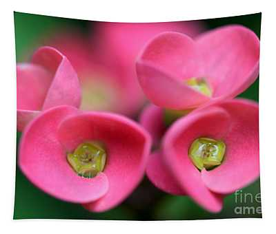 Crown Of Thorns Photo Tapestry