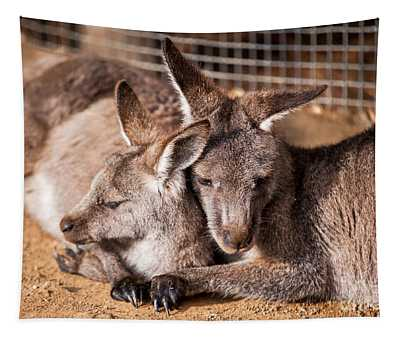 Cuddling Kangaroos Tapestry