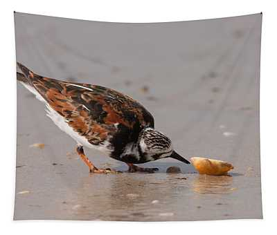 Curious Turnstone Tapestry