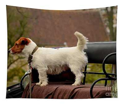 Cute Dog On Carriage Seat Bruges Belgium Tapestry