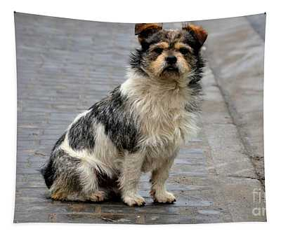 Cute Dog Sits On Pavement And Stares At Camera Tapestry