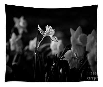 Daffodils In Black And White Tapestry