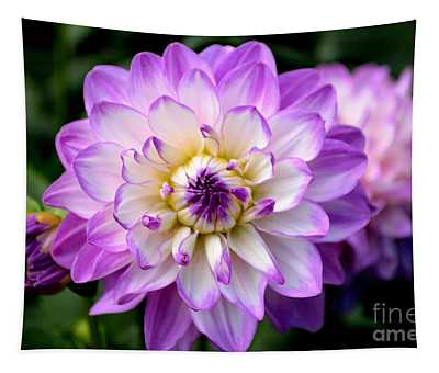 Dahlia Flower With Purple Tips Tapestry
