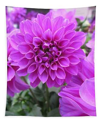 Dahlia In Pink Tapestry