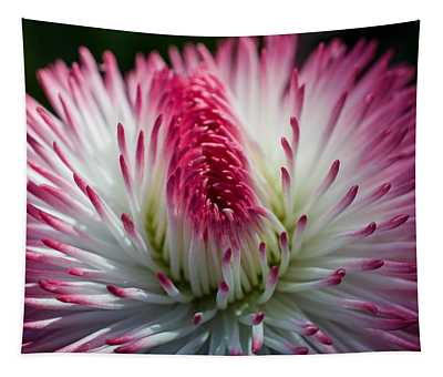 Dark Pink And White Spiky Petals Tapestry