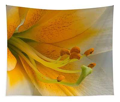 Gold Daylily Close-up Tapestry