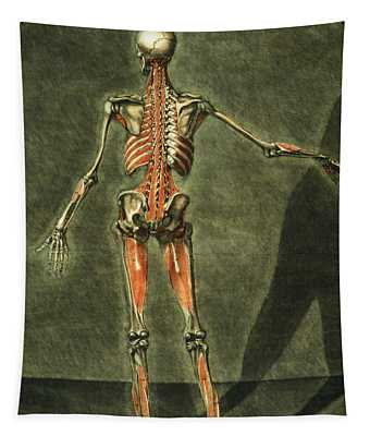 Deep Muscular System Of The Back Tapestry