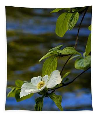 Dogwood On The Merced Tapestry