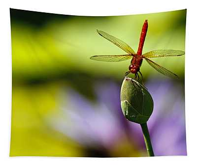 Dragonfly Display Tapestry