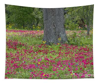 Drummonds Phlox And Crown Tickweed Central Texas Tapestry