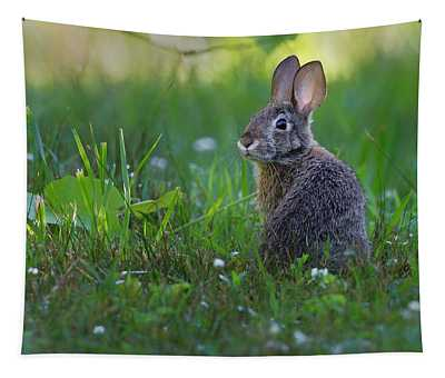Eastern Cottontail Tapestry