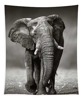 Elephant Approach From The Front Tapestry