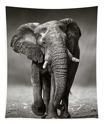 Wildlife Tapestries