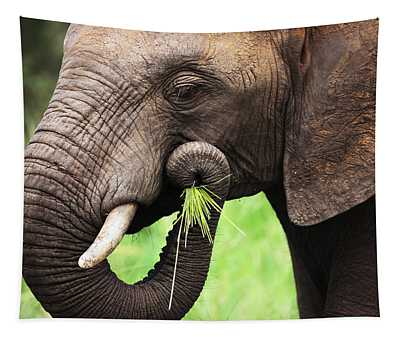 Elephant Eating Close-up Tapestry