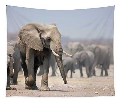Elephant Feet Tapestry