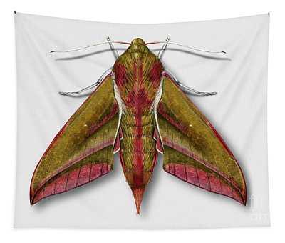 Elephant Hawk Moth Butterfly - Deilephila Elpenor Naturalistic Painting - Nettersheim Eifel Tapestry