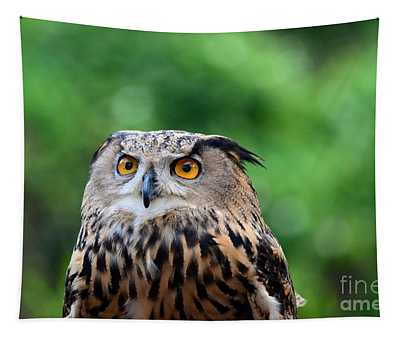 Eurasian Or European Eagle Owl Bubo Bubo Stares Intently Tapestry
