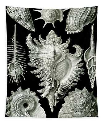 Assorted Sea Shells Tapestry