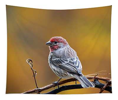 Fall Finch Tapestry